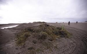 La playa de Poniente se llena de cañaveras por las lluvias