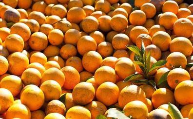 Siete detenidos por robar 2.700 kilos de naranjas