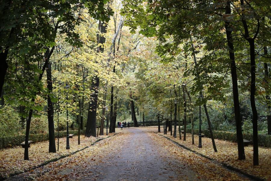 El bosque de la Alhambra se rinde al otoño