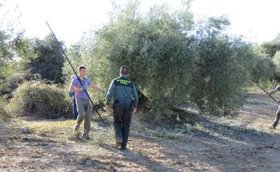 Más de 4.600 kilos de aceituna robados ya y refuerzo en el campo