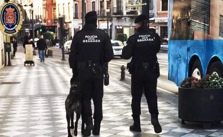 El perro de la Policía Local de Granada herido durante una misión regresa al trabajo