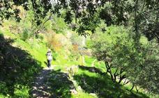 5 bosques de Granada por los que pasear este fin de semana
