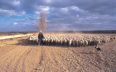 Pastores contra el olvido en España