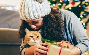 Navidad 'felina': 3 regalos que tu gato no podrá rechazar