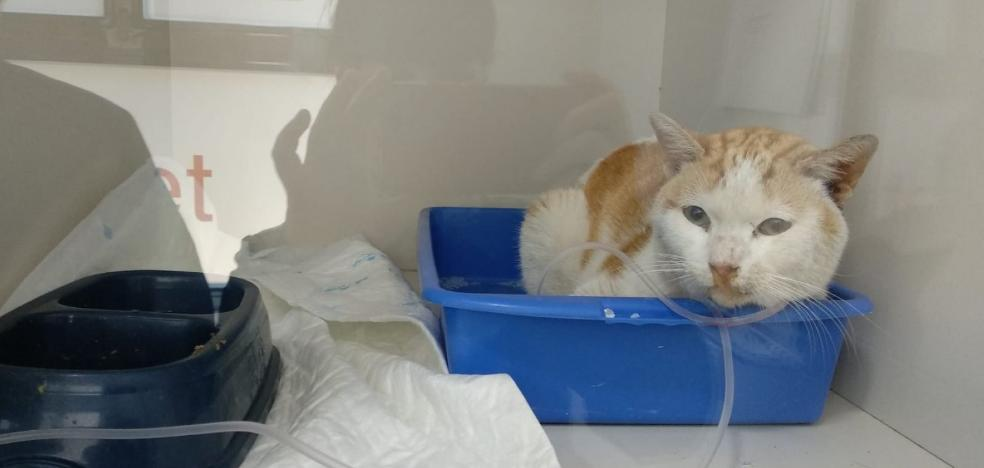 Encuentran cuatro gatos muertos y un quinto envenenado en la capital