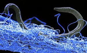 El mundo perdido sale a la luz: descubren un inmenso ecosistema subterráneo