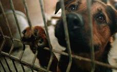 Alemania prohíbe adoptar perros de los refugios de animales en Navidad para evitar abandonos