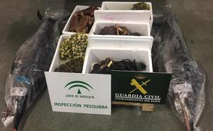 Decomisados 111 kilos de pescado y marisco