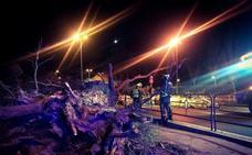 Un árbol cae sobre dos personas cuando iban a subirse a él