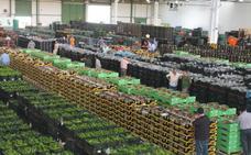 Almería ya exporta más del 80% de las frutas y hortalizas que produce