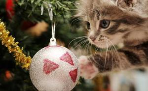 3 regalos perfectos para los amantes de los gatos