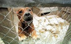 Denuncian un caso de canibalismo entre perros en una casa de Híjar