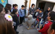 Estas son todas las actividades gratis de la Alhambra para las vacaciones de Navidad