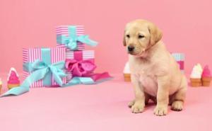 3 regalos que encantarán a tu perro