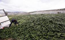 El ferial de Motril acumula ya 2 millones de kilos de pepinos 'destruidos'