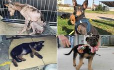 Los otros perros maltratados que no salen en la BBC