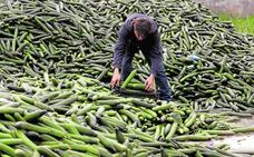 Productores y comercializadoras piden que se retire pepino con cargo a fondos europeos