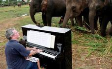 El llamativo concierto para elefantes