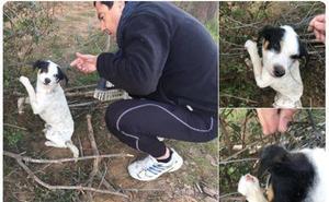 La respuesta de Pérez Reverte a un tuit de Juanma Moreno en defensa de un perro