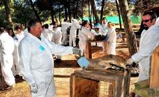 Urge controlar las cabras montesas en Sierra Nevada