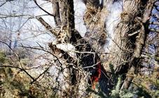 Un incendio forestal una zona de castaños centenarios de la Alpujarra