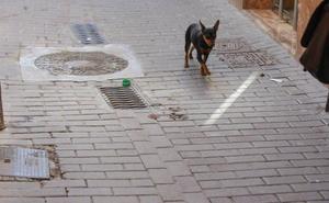 La multa que puede caerte si paseas a tu perro sin correa o no recoges sus heces en Granada