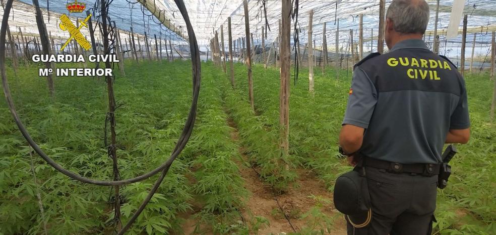 La industria de la marihuana se estanca en Granada