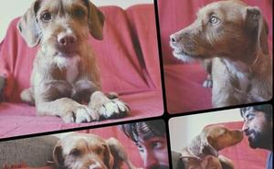 Un juzgado de Granada revoca la adopción de un perro por incumplimientos y ordena devolverlo a la protectora