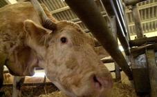 La CE declara indemnes de brucelosis bovina a Granada, Almería y Jaén