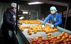 Los productores de cítricos, en apuros