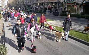 Jaén sale a la calle por sus mascotas