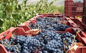 Los agricultores ya pueden solicitar nuevas plantaciones de viñedo