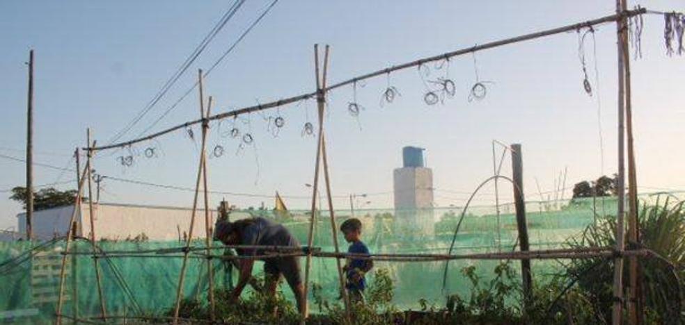 El Ayuntamiento recibe tres ofertas para implantar la red de huertos urbanos