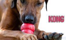 4 motivos por los que tu perro necesita este juguete rebajado en Zooplus