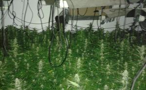 Acuden a una casa en Almería para trasladar a una persona al hospital y descubren una plantación de marihuana