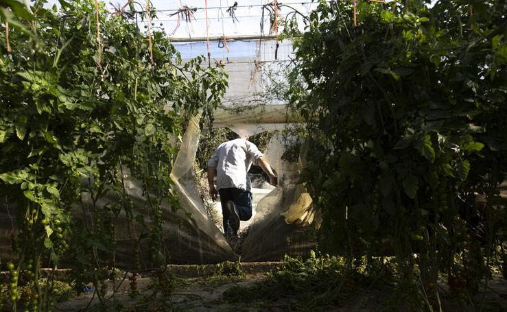Destrozan invernaderos y asaltan una empresa en Albuñol para robar fitosanitarios