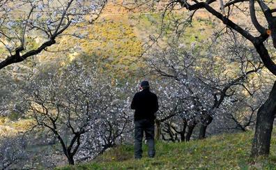 Rutas de los árboles blancos por la provincia de Granada
