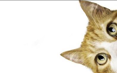 El único gato policía de Austria se da a la fuga