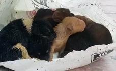 Rescatan 7 cachorros recién nacidos arrojados a un contenedor soterrado en Peligros (Granada)