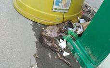 Día mundial del galgo: un animal que sigue sufriendo en Jaén