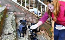 El Colectivo Animalista atiende a unos 200 gatos de diversas colonias callejeras