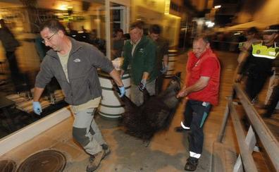 Zootrópolis: cuando los animales salvajes se adentran en la ciudad