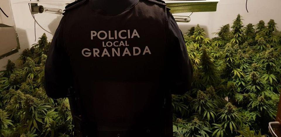 Las cinco operaciones contra el tráfico de 'maría' en Granada que marcaron 2018