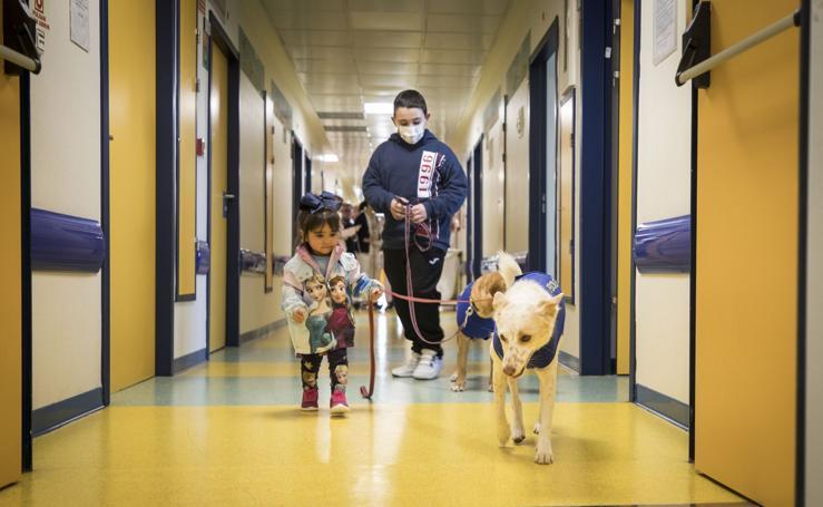 Garbanzo, Pecas y Padi, tres perros que se encargan de ayudar a los niños del Materno Infantil de Granada