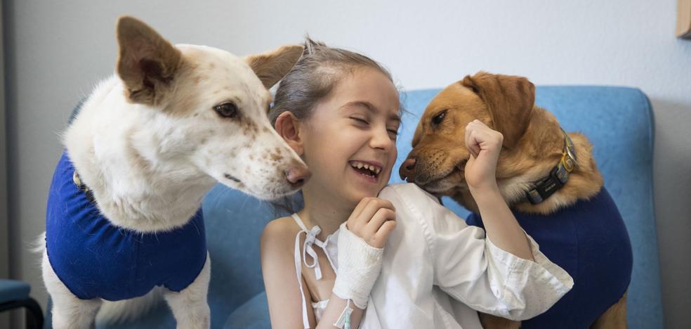 Tres perros terapeutas atienden a niños en el Materno Infantil en Granada