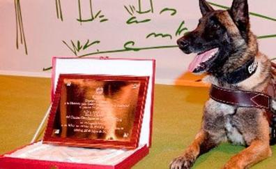 Adiós al perro de la Guardia Civil que ayudó a buscar a Diana Quer, Marta del Castillo y Gabriel Cruz