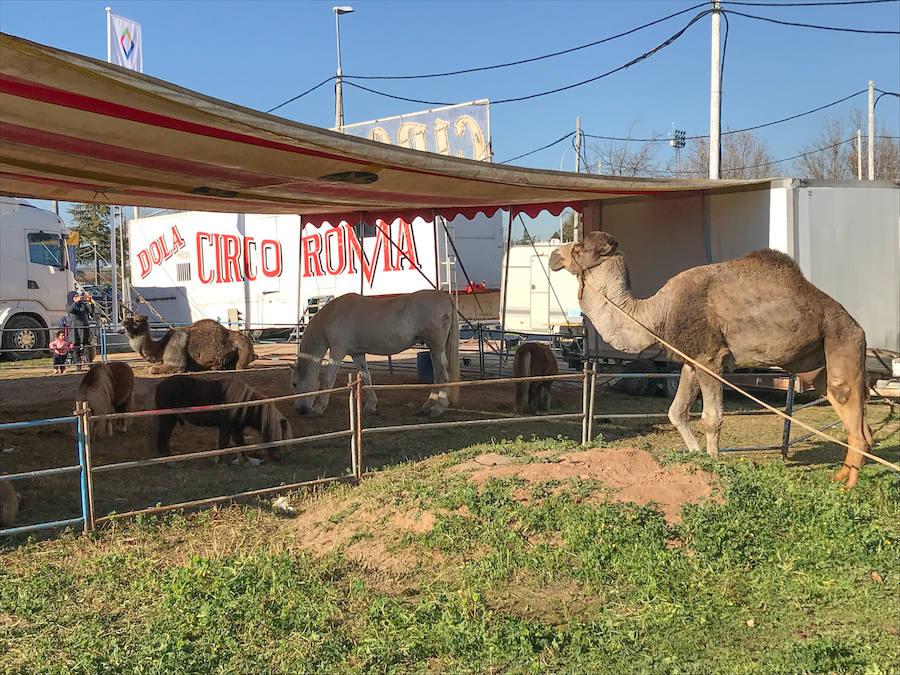 Un circo con animales llega a Albolote