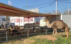 La polémica de un circo que divide Albolote