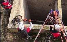 Los Bomberos rescatan a un halcón de un pozo de 90 metros