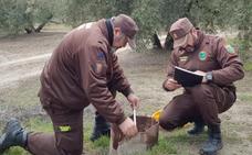 La Guardia Civil tiene localizados setenta pozos ilegales en la provincia de Jaén